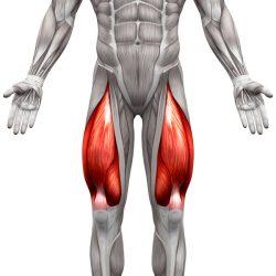 Prednji Bedreni Mišići