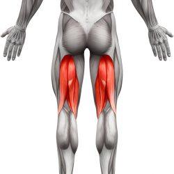 Stražnji Bedreni Mišići