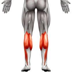 Mišić Lista