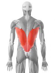 najširi leđni mišić