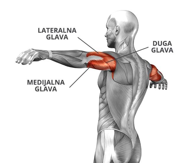 Mišić triceps