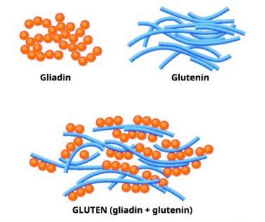 gliadin i glutenin