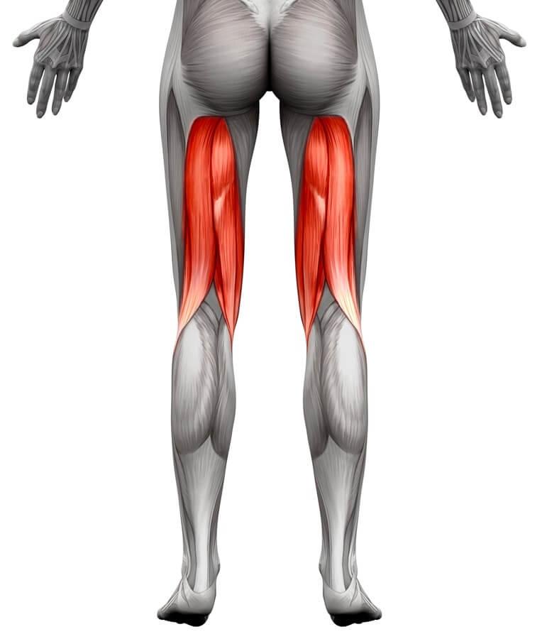 mišići zadnje lože