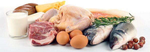 proteinska hrana